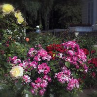 Разноцветье :: Valerii Ivanov