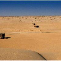 Сахара :: Михаил Даниловцев