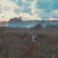 Озеро Плещеево :: Юлия