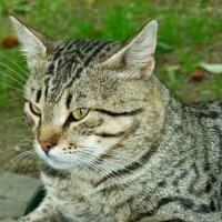 Я - кот...Сам по себе кот... :: Алёнушка Е.