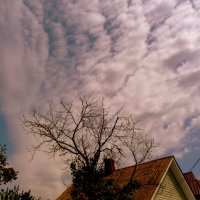 небо над сухим деревом :: Александр Прокудин