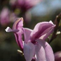 Цветочный хоровод-455. :: Руслан Грицунь