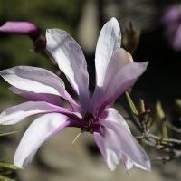 Цветочный хоровод-453. :: Руслан Грицунь