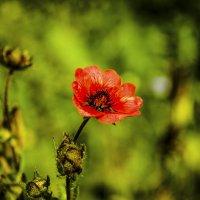 Цветок :: Ivan Lukkonen
