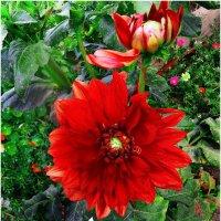 Король всех цветов.... :: Юрий Владимирович