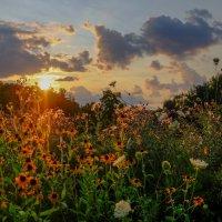 полевые цветы. :: Alexander Hersonski