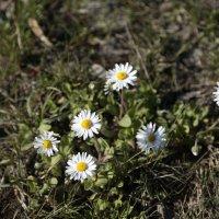 Цветочный хоровод-459. :: Руслан Грицунь
