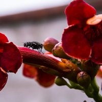 муха села на :: валерий