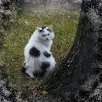 Мурке хочу понравиться))) :: Ольга
