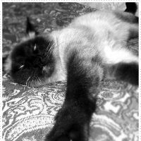 Я сплю, но вижу всё и всех.... :: Светлана Киклевич