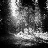 Прогулка в лесу :: SvetlanaLan .