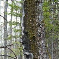 Дух леса :: Светлана Франчук
