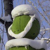 Холодно зимой на посту! :: Александр Попов