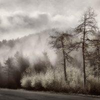 Утренний туман. :: Slava Sh
