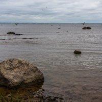 На Финском заливе :: Анатолий Мигов