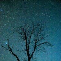 Персеи́ды — метеорный поток :: Денис Щербак