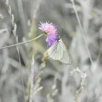 Бабочка :: Юрий