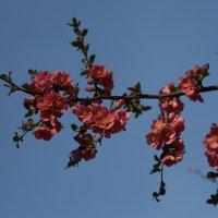 Цветочный хоровод-469. :: Руслан Грицунь