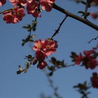 Цветочный хоровод-468. :: Руслан Грицунь
