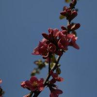 Цветочный хоровод-467. :: Руслан Грицунь