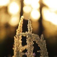 волшебство на закате :: Оксана Карандюк