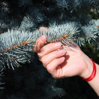 Прекрасная рука :: Лина Свиридова