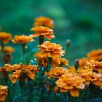 Цветочки :: Олег Бондаренко
