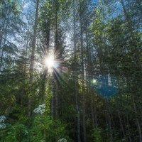 В лесу :: Ivan Lukkonen