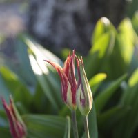 Цветочный хоровод-472. :: Руслан Грицунь