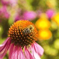 Пчёлка :: Ирина Федоренко