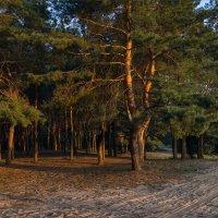 В нежном свете уходящего солнца :: Denis Aksenov
