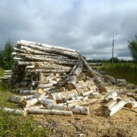 Берёзовые дрова :: Николай Туркин