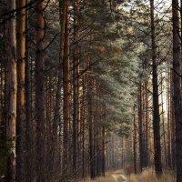 Дорога в лесу :: Alexander Asedach