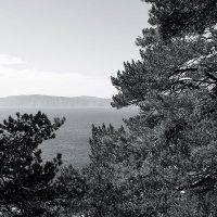 Природа Байкала в ч/б :: Алексей Белик