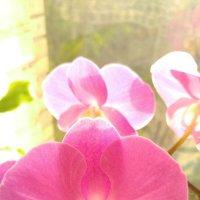 Орхидея на окне :: esadesign Егерев