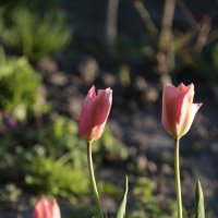 Цветочный хоровод-480. :: Руслан Грицунь