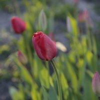 Цветочный хоровод-478. :: Руслан Грицунь