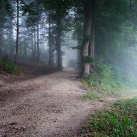две дороги, два пути :: Elena Wymann