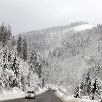 Дорога в Карпатах :: Олег