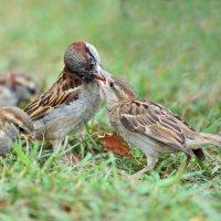 Тоже птицы. :: Светлана Ивановна Медведева