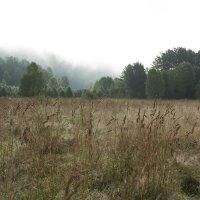 Утро.Туман отступает. :: Ольга