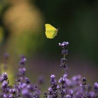 Полет бабочки :: Марат Макс