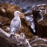 Если чайка села в воду... :: Юрий Вайсенблюм