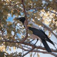 Crow ... :: Vadim77755 Коркин