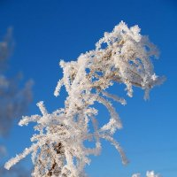 Морозно :: Николай Полыгалин