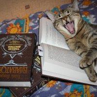 кошка, которая читала книжку :: Iulia Efremova