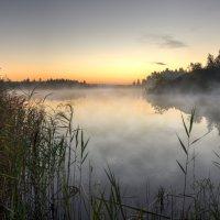 Тихое утро на озере :: Илья Костин