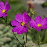 Последние цветы лета :: Lika Shakhmatova