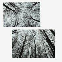 И все-таки, у голых,облезлых,мрачных деревьев присутствует своя эстетичность :: Allyn Brooks