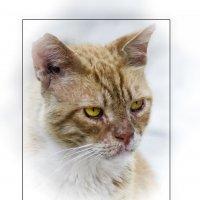 Портрет гуляки-3-из серии Кошки очарование мое! :: Shmual Hava Retro